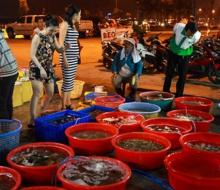 Đột nhập chợ hải sản bình dân ở Đà Nẵng