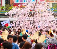 Đà Nẵng háo hức chào đón lễ hội hoa Anh đào
