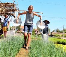 Khi khách Tây về Trà Quế làm nông dân