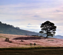 Hót hòn họt chỉ sau một đêm, đồi cỏ hồng tại Đà Lạt biến thành cỏ tuyết