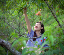 Du khách thích thú với trải nghiệm lên Sa Pa hái đào chín và dâu tây đỏ