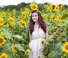 Về Tiền Giang ngắm vườn hoa hướng dương Mãn Đình Hồng đang nở rộ