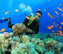 """""""Sống khác"""" dưới đáy đại dương Hòn Mun (Khánh Hòa)"""