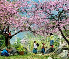 Chỉ điểm 4 loài hoa đẹp ở Mộc Châu mê đắm du khách